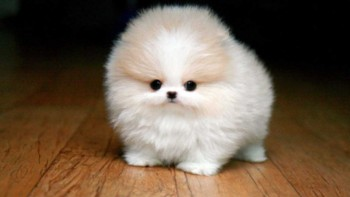 Tiny Fluffy Puppy made redundant following Mind, Body & Soul